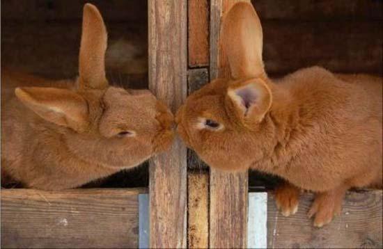 Ερωτευμένα ζώα (11)