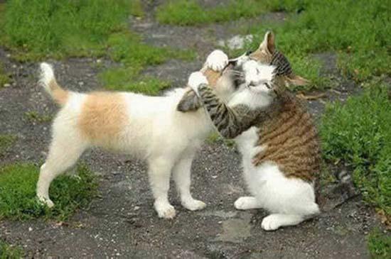 Ερωτευμένα ζώα (12)