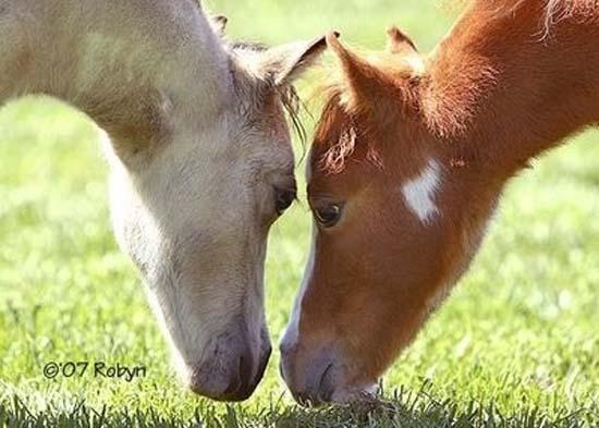 Ερωτευμένα ζώα (13)
