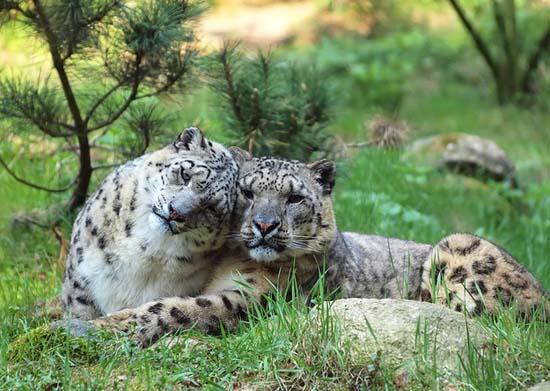 Ερωτευμένα ζώα (16)