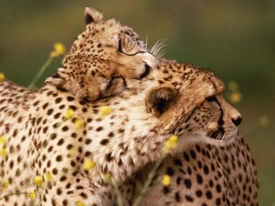 Ερωτευμένα ζώα (17)
