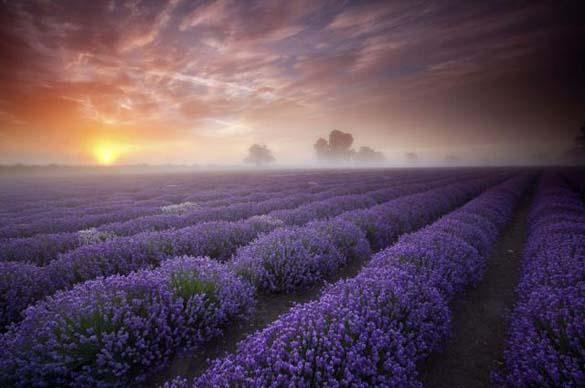 Φύση σε εκπληκτικές φωτογραφίες (25)