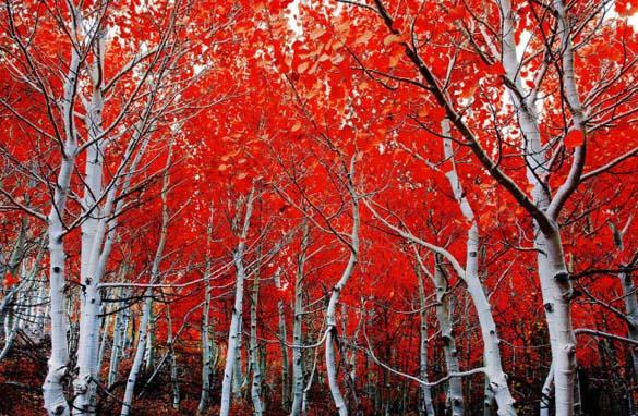 Φύση σε εκπληκτικές φωτογραφίες (5)