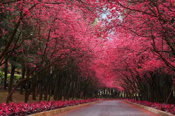 Φύση σε εκπληκτικές φωτογραφίες (6)