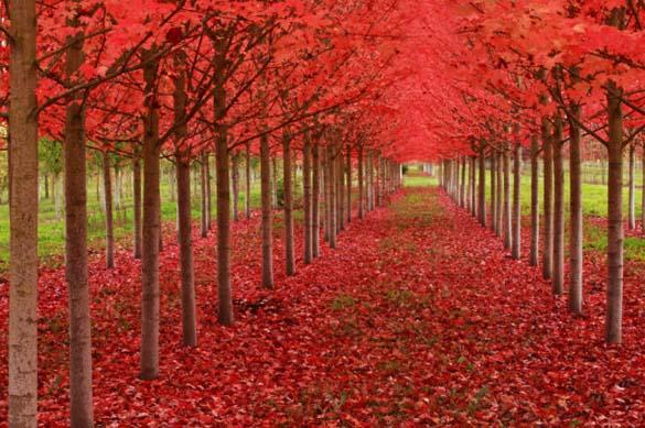 Φύση σε εκπληκτικές φωτογραφίες (7)