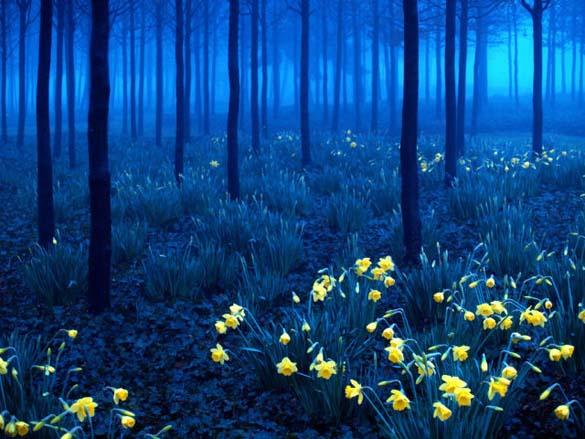 Φύση σε εκπληκτικές φωτογραφίες (8)