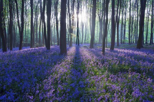 Φύση σε εκπληκτικές φωτογραφίες (11)