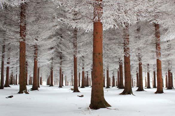 Φύση σε εκπληκτικές φωτογραφίες (12)