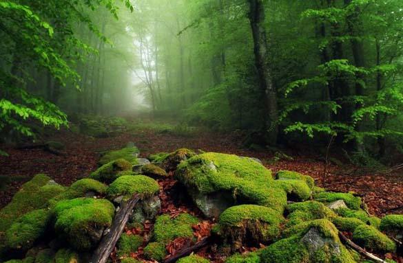 Φύση σε εκπληκτικές φωτογραφίες (13)