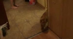 Γάτα με πολύ παράξενη εμμονή (Video)