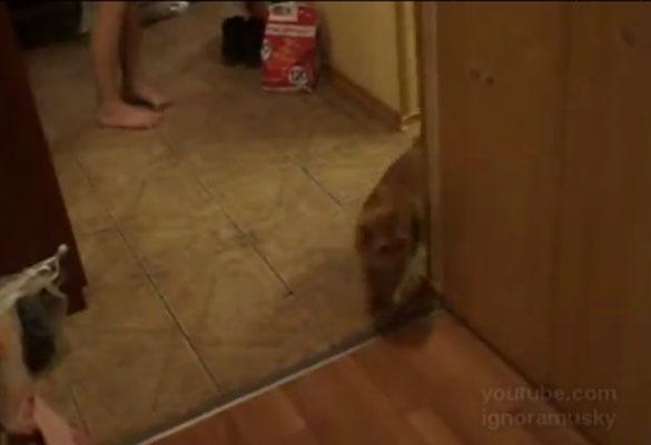 Γάτα με πολύ παράξενη εμμονή