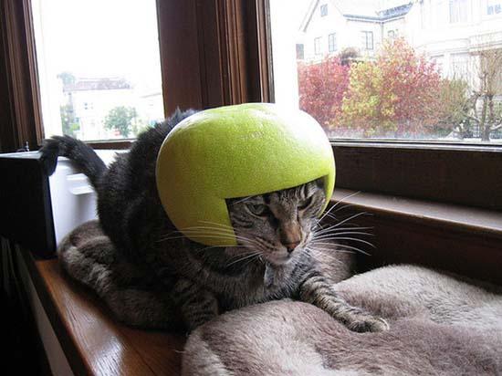 Γάτες με κράνη από φρούτα (1)