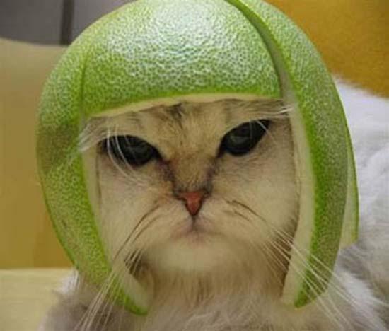 Γάτες με κράνη από φρούτα (4)
