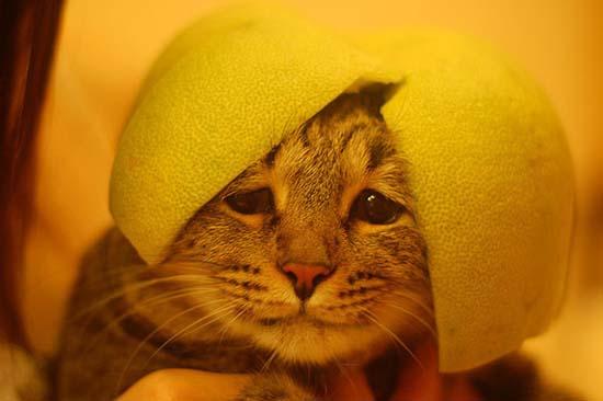 Γάτες με κράνη από φρούτα (8)
