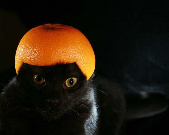 Γάτες με κράνη από φρούτα (9)
