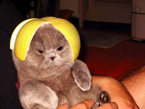 Γάτες με κράνη από φρούτα (10)