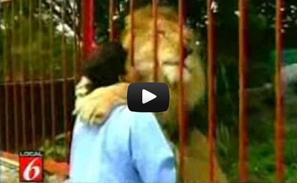 Λιοντάρι αγκαλιάζει και φιλάει τη γυναίκα που το έσωσε