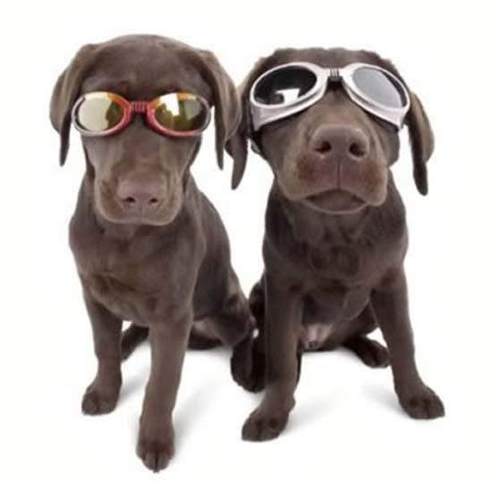 Παράξενα γυαλιά ηλίου (6)