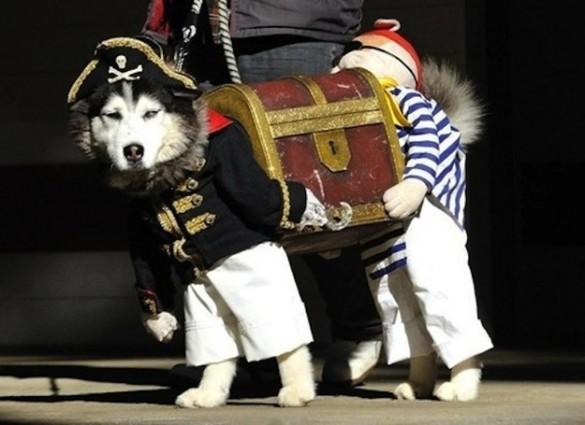 Κορυφαία μεταμφίεση σκύλου | Φωτογραφία της ημέρας