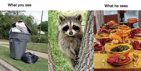 Πράγματα: Άνθρωπος vs Ζώα (4)