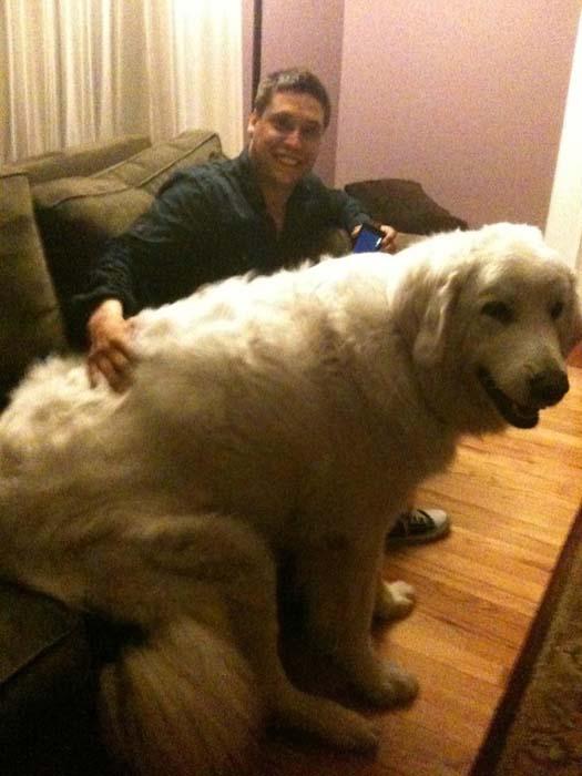 «Σκυλάκια» που δεν χωρούν σε διαμέρισμα (1)
