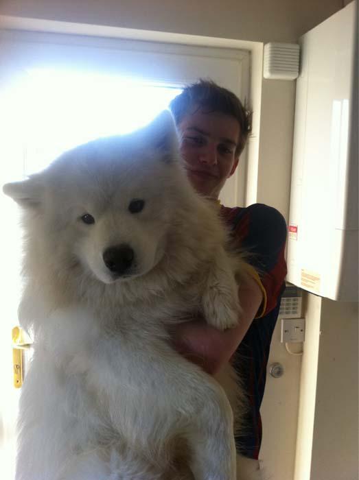 «Σκυλάκια» που δεν χωρούν σε διαμέρισμα (2)