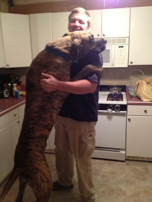 «Σκυλάκια» που δεν χωρούν σε διαμέρισμα (5)
