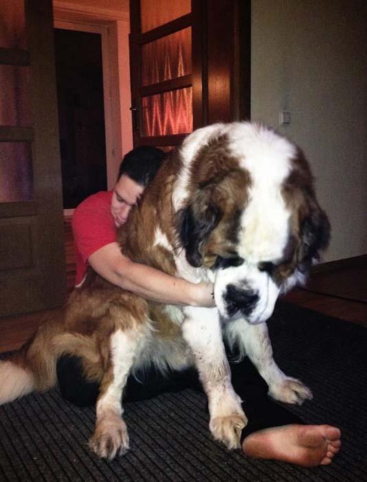«Σκυλάκια» που δεν χωρούν σε διαμέρισμα (7)