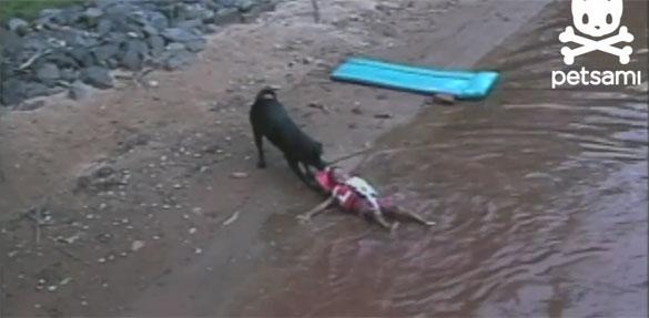 Σκύλος ναυαγοσώστης σώζει παιδάκι