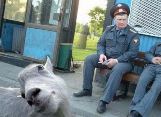 Τα 35 πιο ξεκαρδιστικά photobombs από ζώα (12)