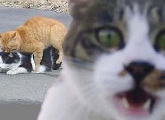 Τα 35 πιο ξεκαρδιστικά photobombs από ζώα (16)