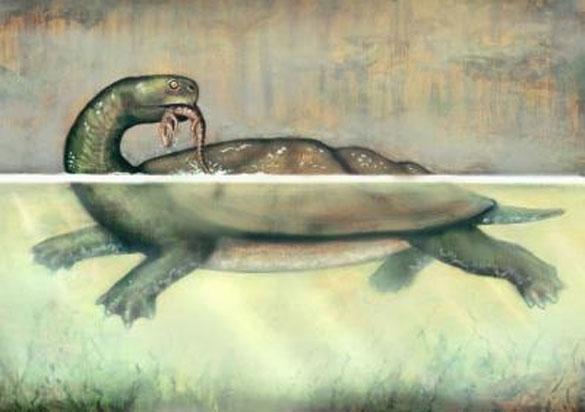 Χελώνα σε μέγεθος αυτοκινήτου