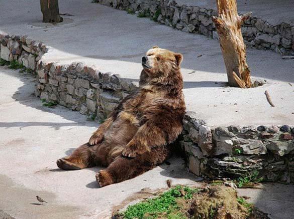 Ζώα που κάθονται σαν άνθρωποι (10)