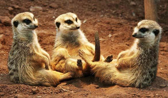 Ζώα που κάθονται σαν άνθρωποι (15)