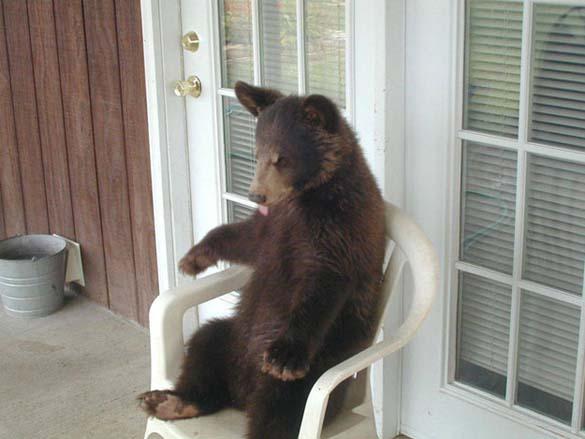 Ζώα που κάθονται σαν άνθρωποι (23)