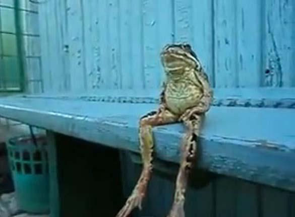 Ζώα που κάθονται σαν άνθρωποι (25)