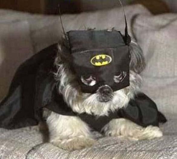 Οι 10 πιο αστείοι Batman (1)