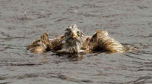 Αετός... βρήκε τον μάστορα του! (4)