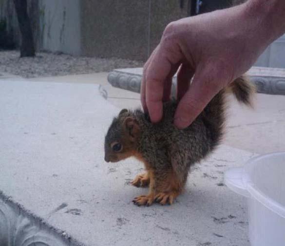 Αξιολάτρευτα μικροσκοπικά ζώα (2)