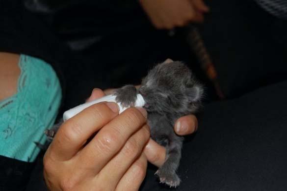 Αξιολάτρευτα μικροσκοπικά ζώα (4)