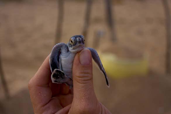 Αξιολάτρευτα μικροσκοπικά ζώα (7)