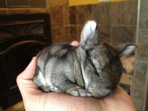 Αξιολάτρευτα μικροσκοπικά ζώα (9)