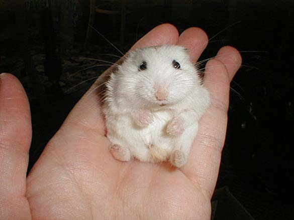 Αξιολάτρευτα μικροσκοπικά ζώα (10)