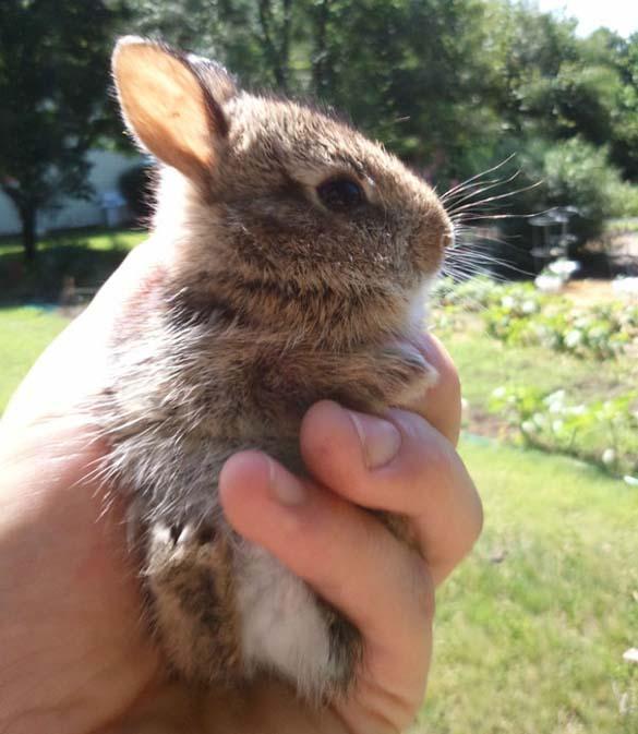 Αξιολάτρευτα μικροσκοπικά ζώα (12)