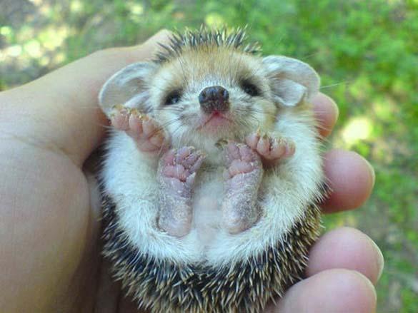 Αξιολάτρευτα μικροσκοπικά ζώα (15)