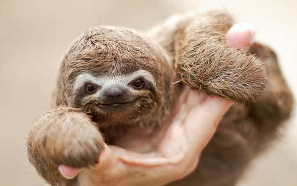 Αξιολάτρευτα μικροσκοπικά ζώα (17)