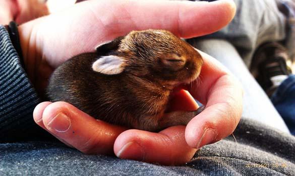 Αξιολάτρευτα μικροσκοπικά ζώα (19)