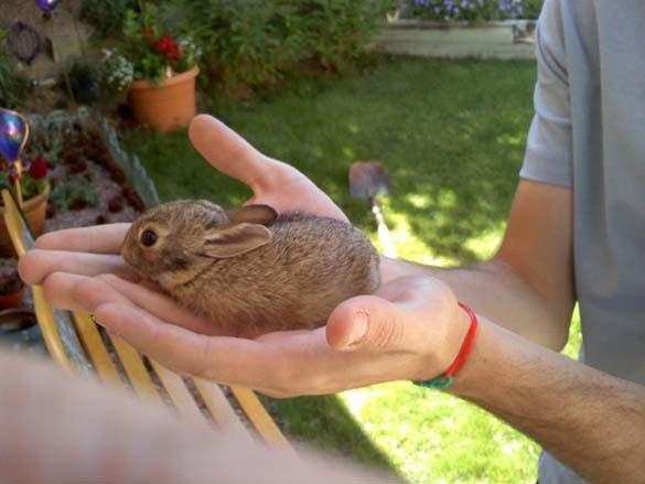 Αξιολάτρευτα μικροσκοπικά ζώα (22)