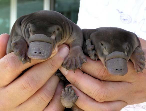 Αξιολάτρευτα μικροσκοπικά ζώα (23)