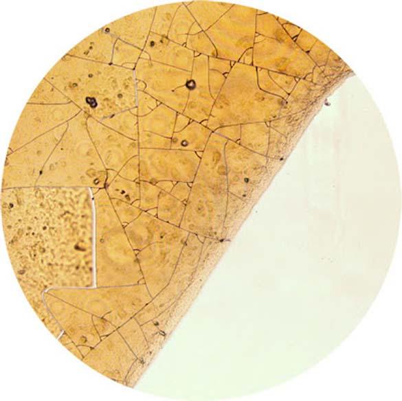 Δημοφιλή ροφήματα κάτω από το μικροσκόπιο (6)